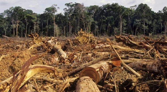 Crisis del capitalismo y crisis ecológica