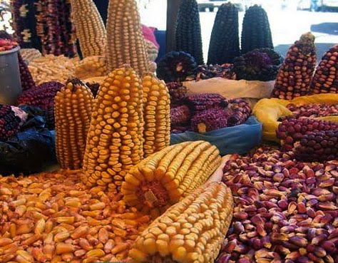 maiz Tlaxcala